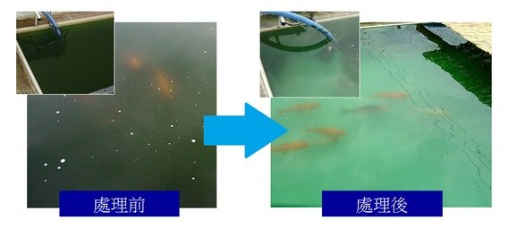 廢水淨化-前後差異